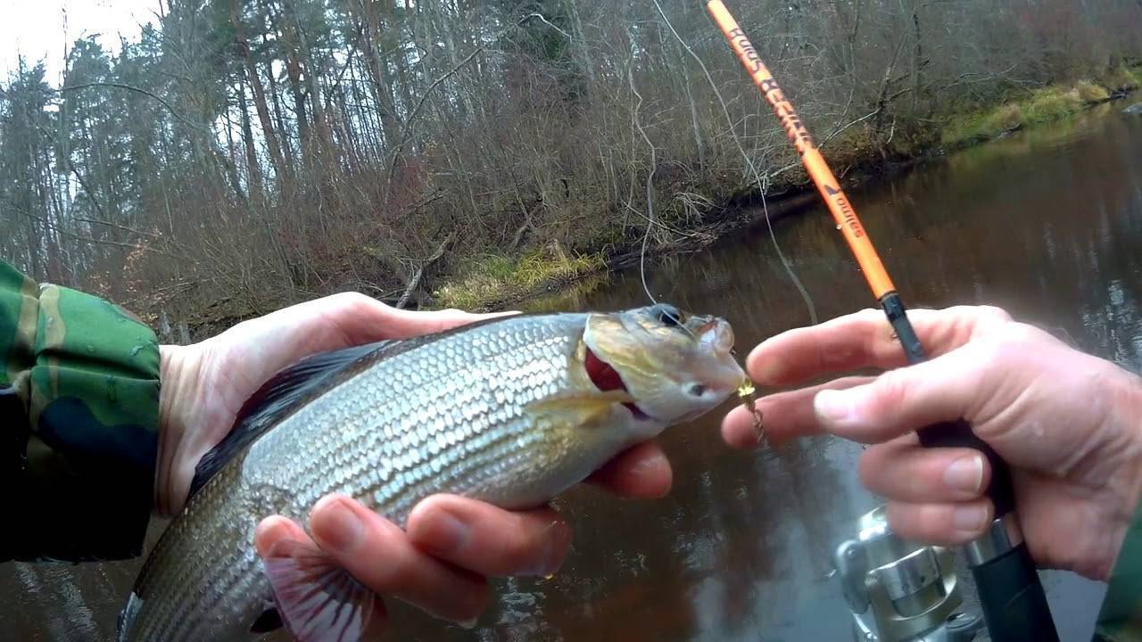 Рыбалка в хакасии: советы рыболовам :: syl.ru