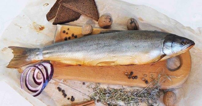 Голец: что за рыба, польза, как выбрать, как хранить, как приготовить