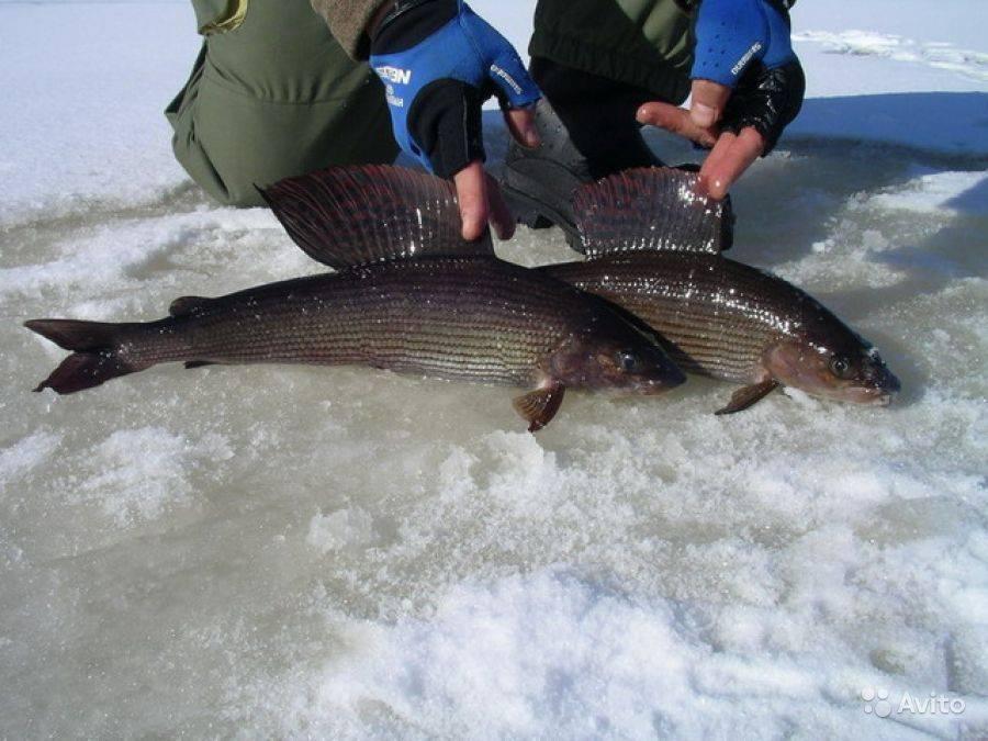 Кемерово - календарь рыболова. рыбалка в кемерово, график клёва рыбы.