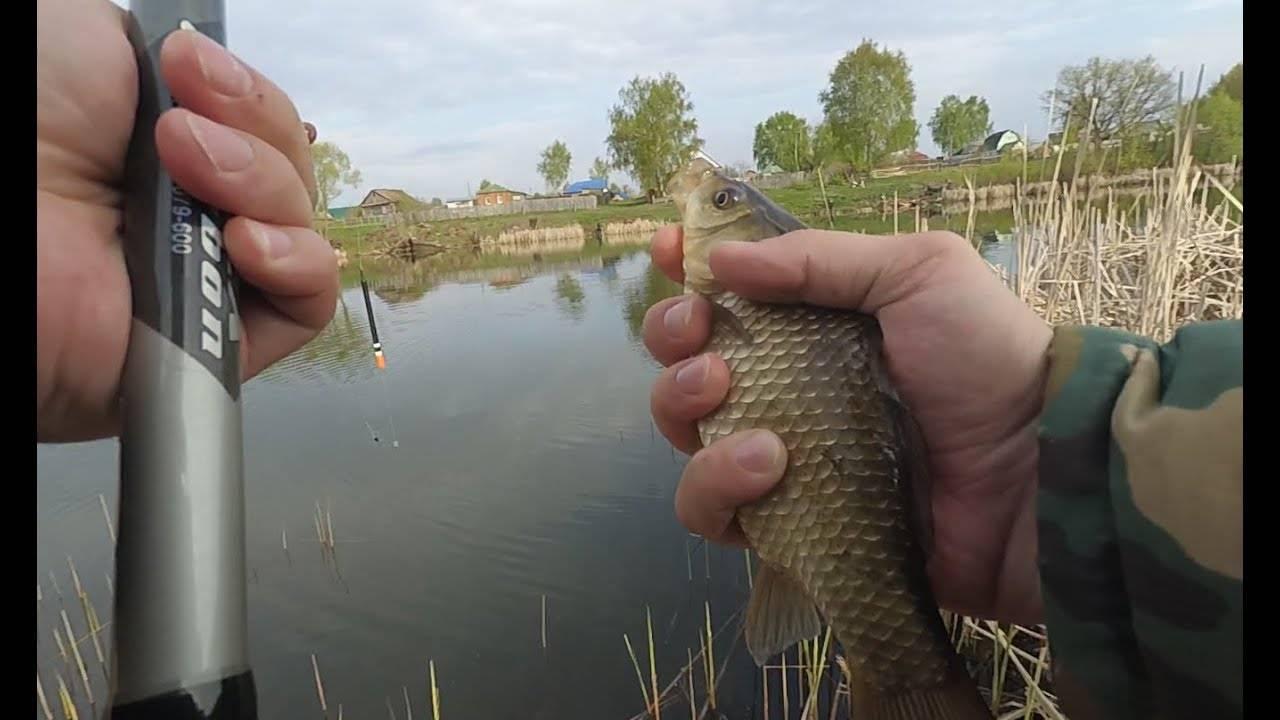 Особенности ловли карася на поплавочную удочку