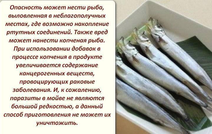 Мойва — польза и вред знаменитой морской рыбы