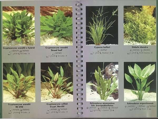 Аквариумные папоротники: виды, фото с названиями и описанием