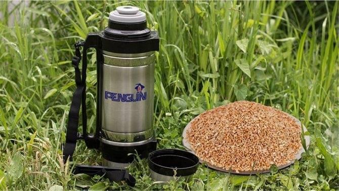 Пшеница в термосе для рыбалки — способы приготовления