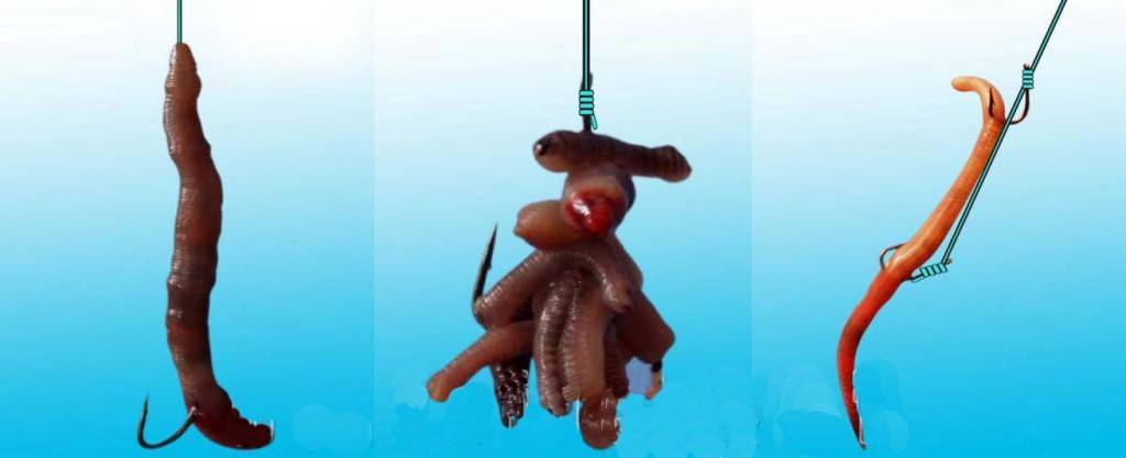 Как правильно насаживать червя на крючок при рыбной ловле, советы опытных рыболовов