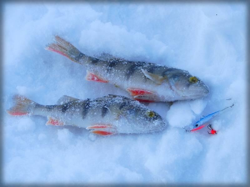 Рыбалка на реках кировской области и в кирове: обзор водоемов