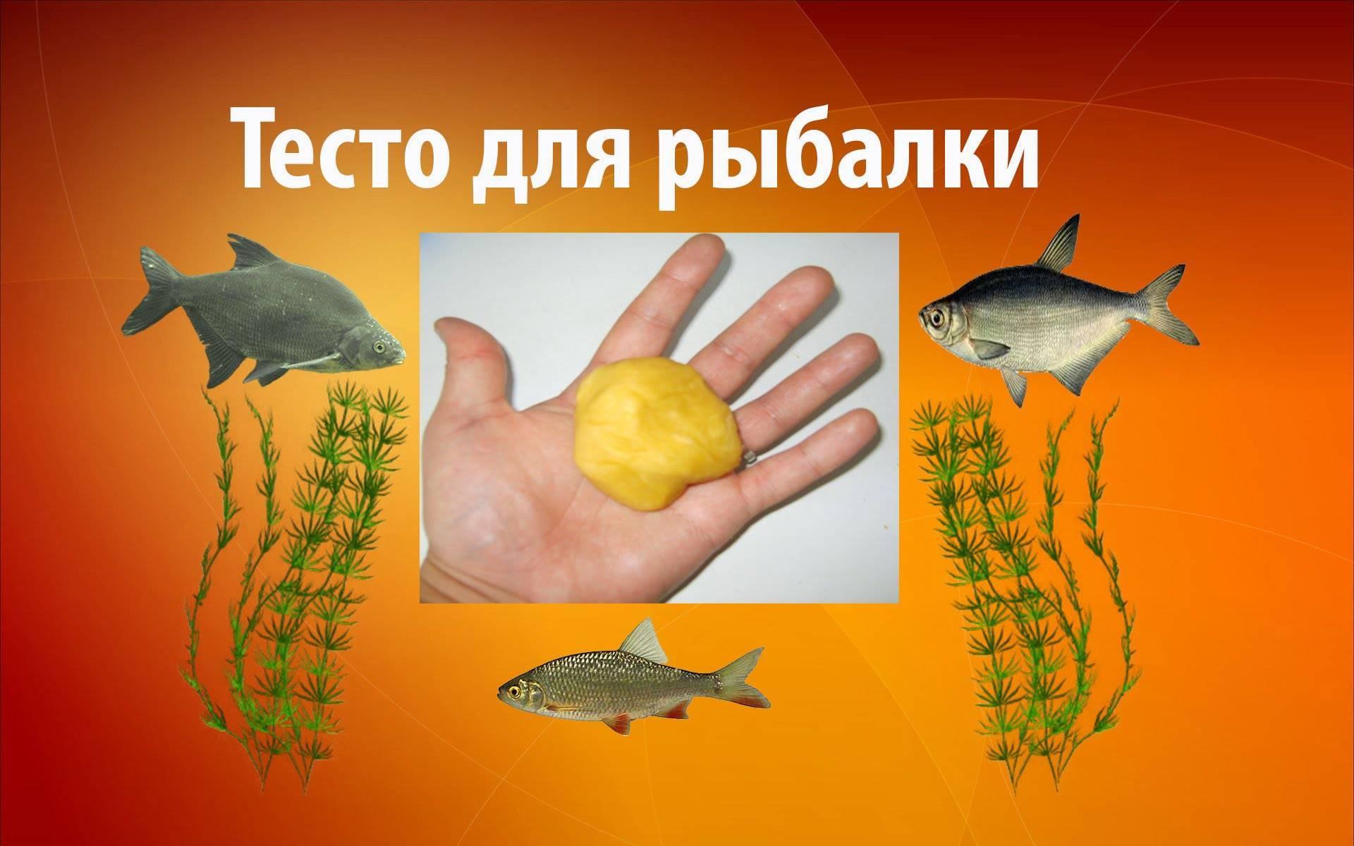 Тесто для рыбалки