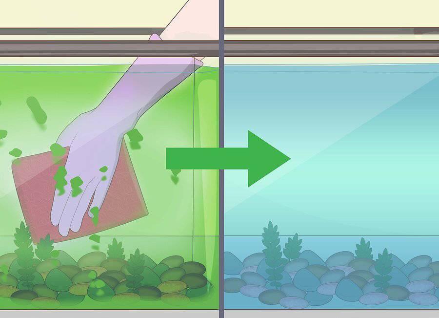 Кристальная вода в аквариуме: как сделать прозрачной, какие средства помогают добиться абсолютно чистой h2o, можно ли сохранить результаты
