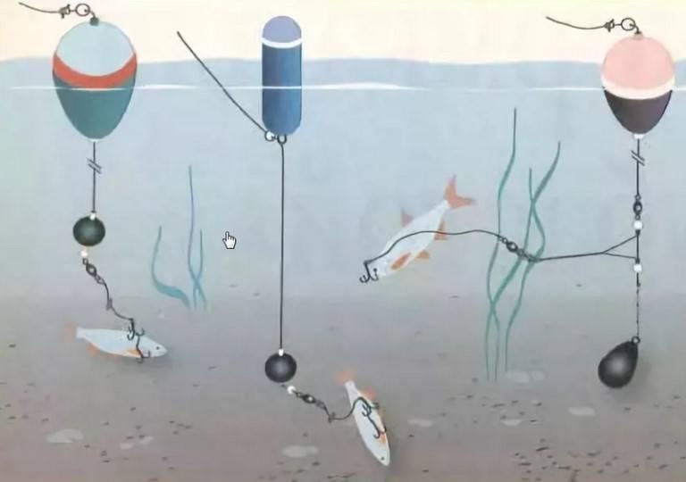 Как ловить щуку на живца: лучшие места для рыбалки и варианты снастей