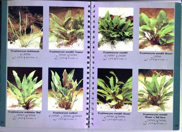 Аквариумные растения — названия,виды,фото,описание