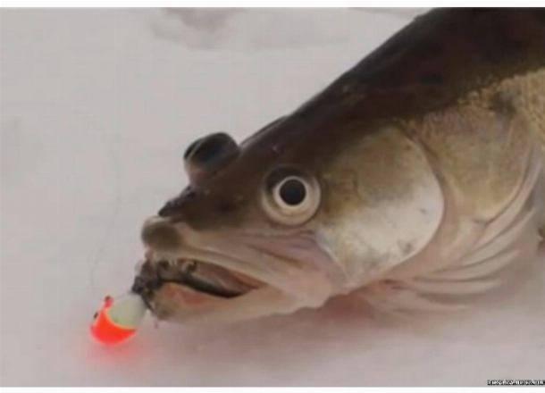 На что ловить судака осенью: на какие приманки берет и на что клюет, тонкости процесса