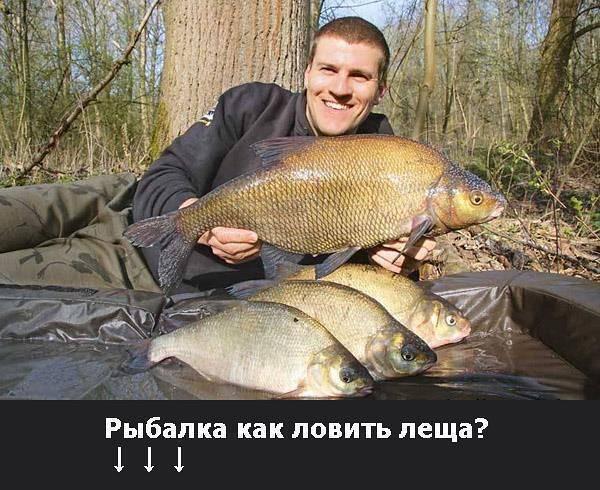 Озеро белое в вологодской области - рыбалка и отдых