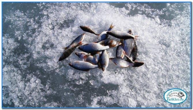 ✅ крутое рыбалка старооскольский район - danafish.ru