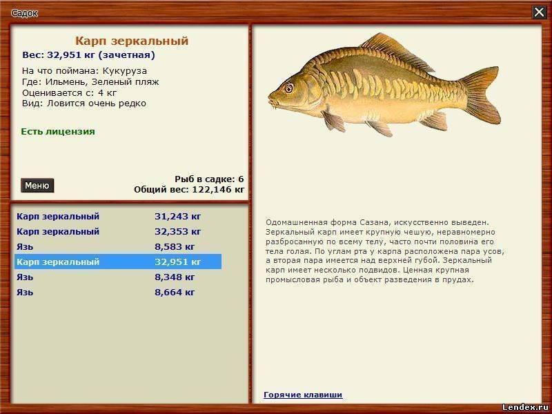 Сазан и карп. секреты рыбалки