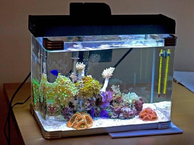 Температура воды в аквариуме для рыбок: какая должна быть