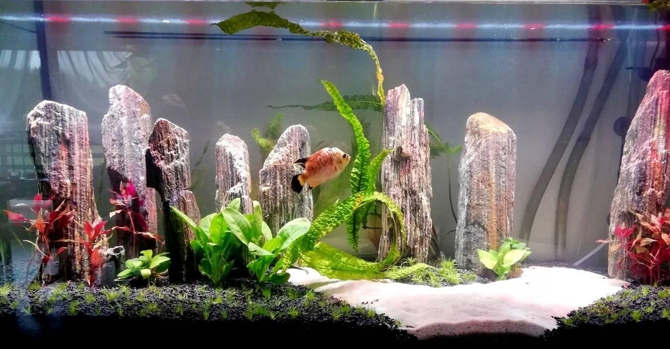 Кварцевый песок в аквариуме: плюсы и недостатки грунта