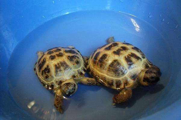 Стоит ли заводить черепаху: плюсы и минусы животного   плюсы и минусы