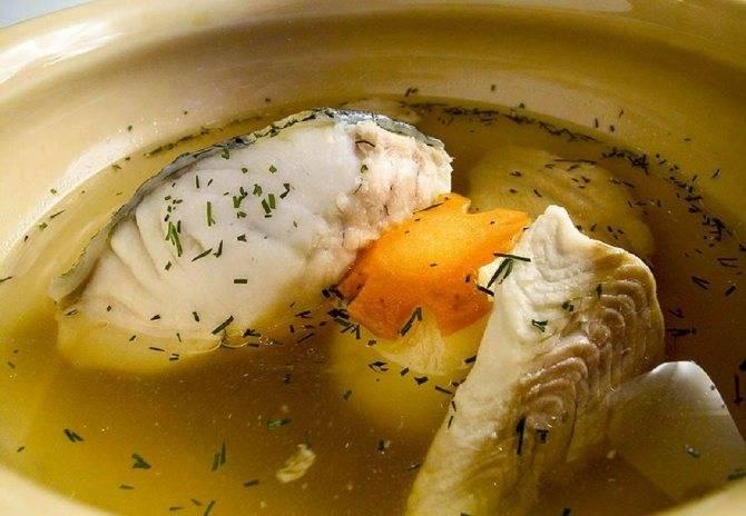 Из какой рыбы лучше варить суп?