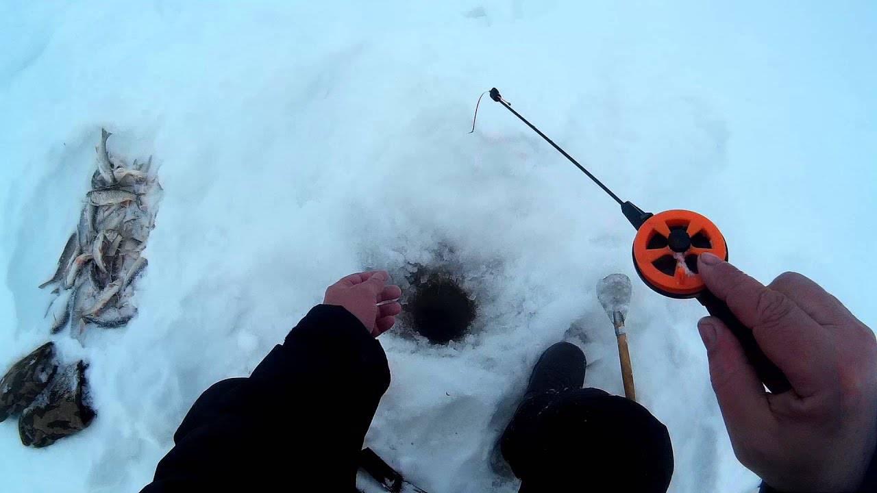 Ловля ельца зимой на течении: какие приманки использовать