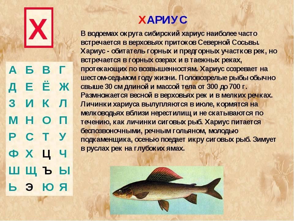 Рыба хариус