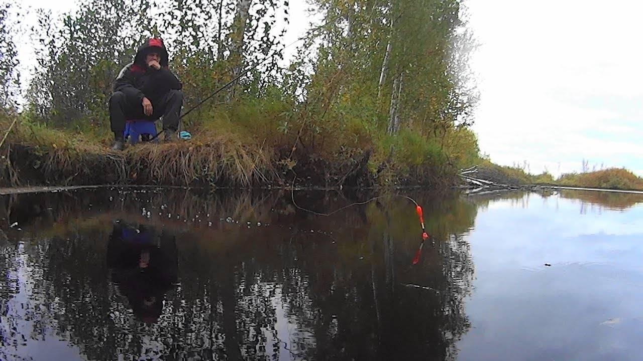 Ловля карася на удочку осенью