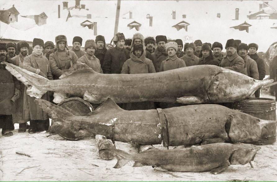 Водка белуга: история, виды, состав, отзывы | koktejli.ru