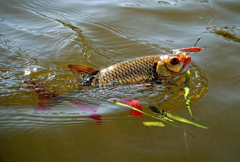 Рыбалка на Медвежьих озёрах