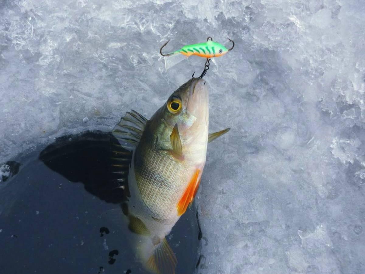 Ловля окуня по первому льду: снасти для рыбалки, меры предосторожности на реке