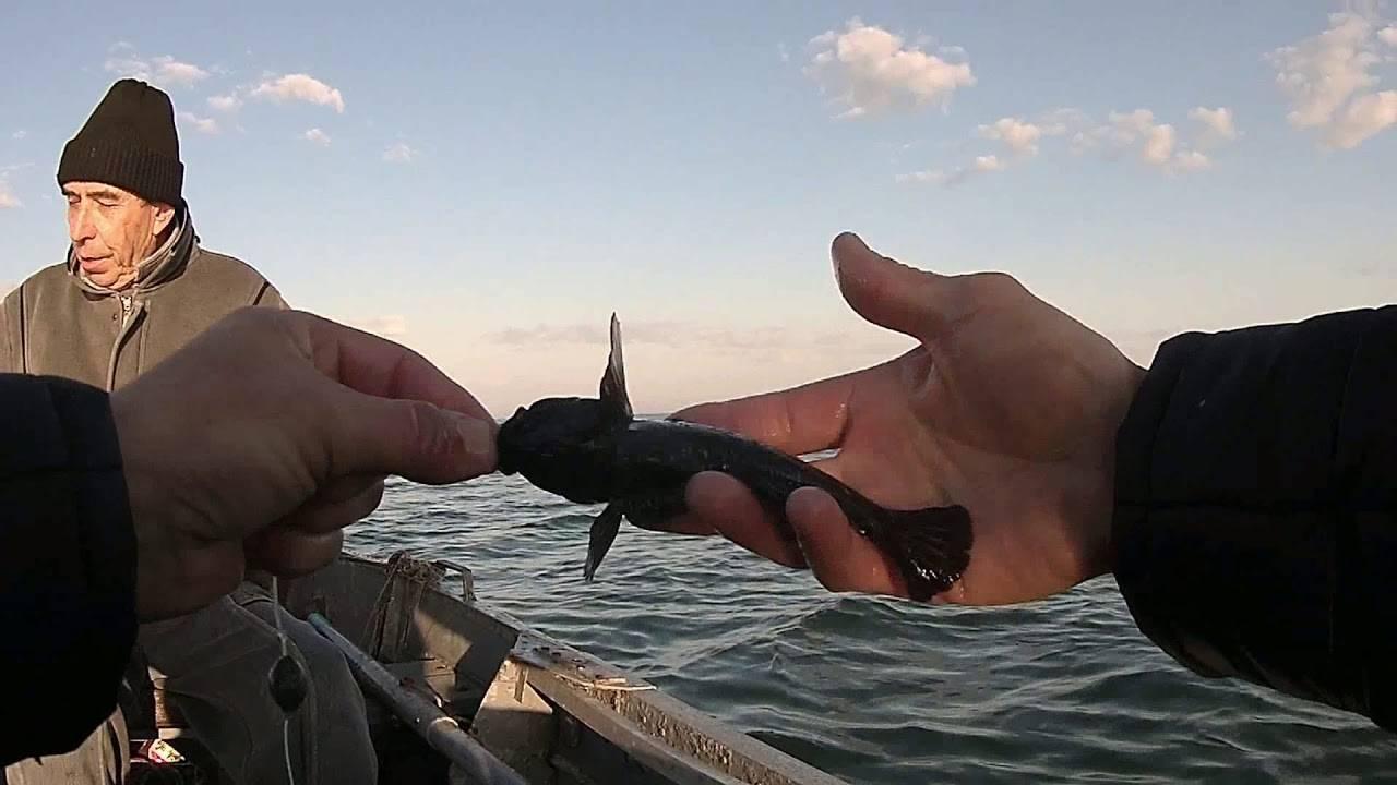 Ловля бычка в чёрном и азовском морях, и в реках - все о рыбалке