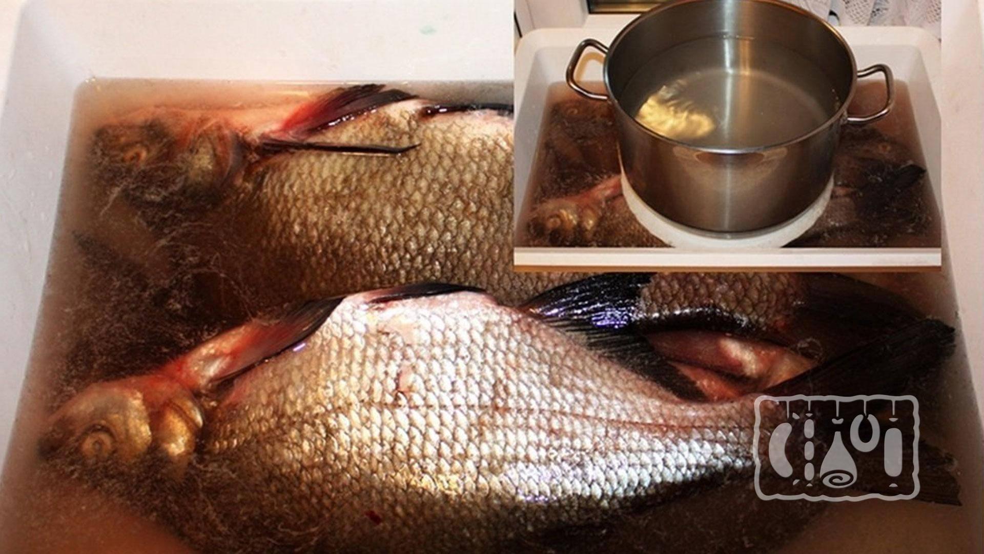Маринад для копчения рыбы, простые рецепты рассола