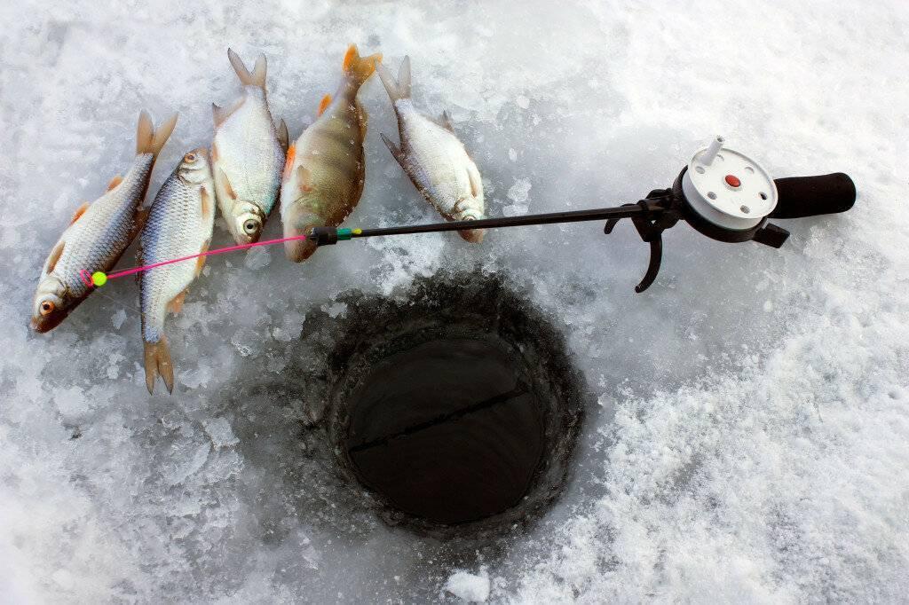Ловля плотвы: правила и секреты рыбалки на плотву