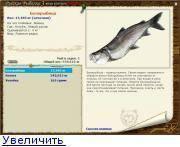 Белорыбица - что за рыба? рыба нельма (белорыбица) - фото, описание, как выглядит?