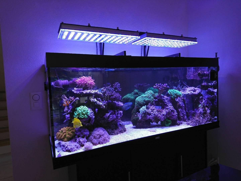 Освещение для аквариума: подсветка для аквариума, свет для аквариума, сколько должен гореть свет в аквариуме, какое освещение должно быть в аквариуме, нужен ли свет в аквариуме