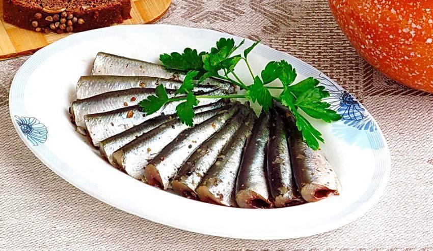 Килька пряного посола — вкусные рецепты. килька: польза и вред маленькой рыбки. как употреблять кильку для пользы, потенциальный вред кильки при заболеваниях желудка