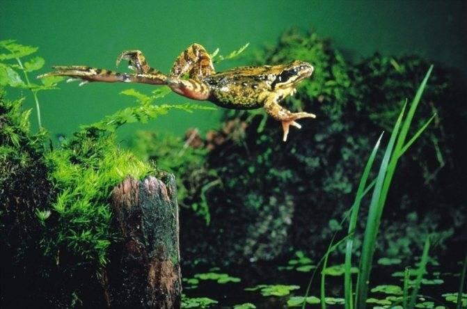 Жаба – описание, виды, где обитают, чем питаются, фото