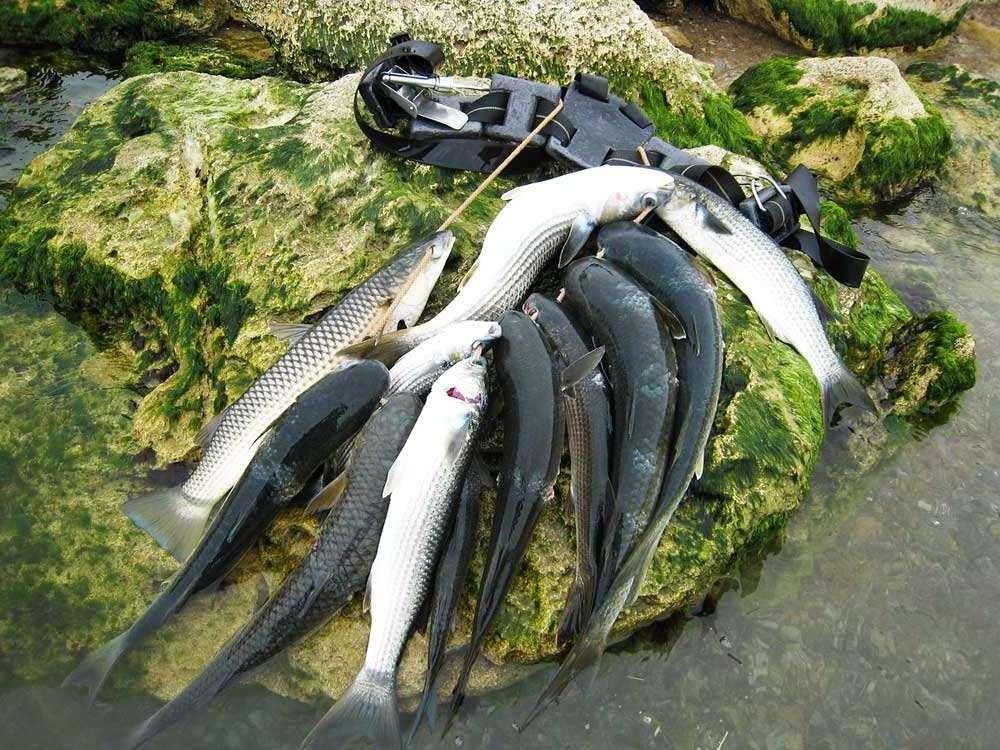 Рокфишинг - морская рыбалка: снасти, приманки, места ловли, рокфишинг на черном море