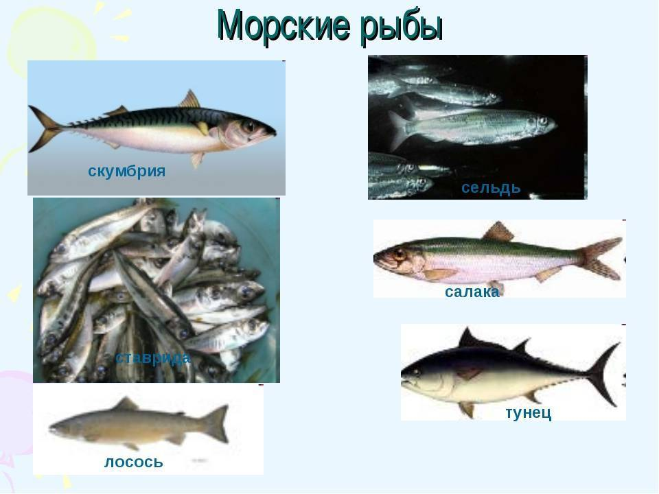 Скумбрия (более 100 рецептов с фото) - рецепты с фотографиями на поварёнок.ру