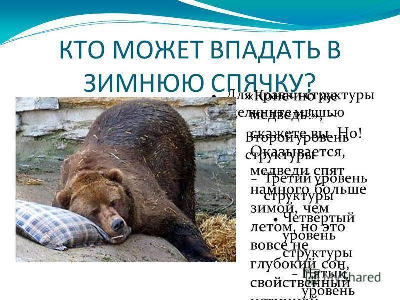 Какие животные впадают в спячку? - other