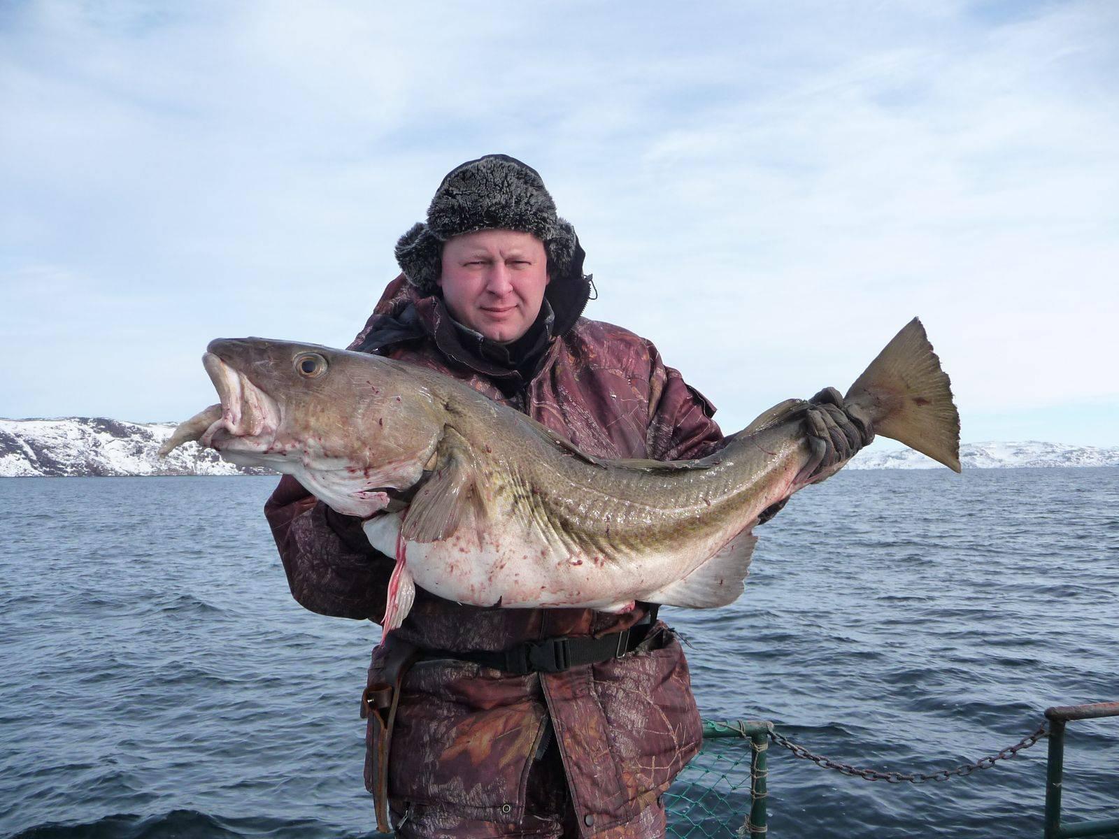 Рыба баренцева моря