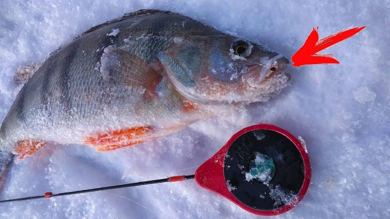 Рыбалка в глухозимье. особенности ловли и поиска рыбы | навигатор рыболова и охотника | яндекс дзен
