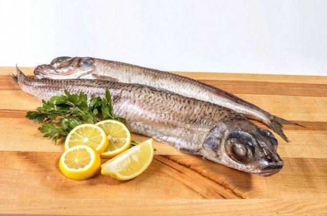 Тилапия: что это за рыба, полезна ли она или вредна, где водиться, рецепты как приготовить