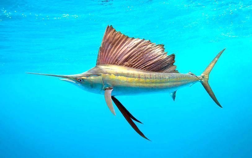 Копченая белая рыба: виды, названия, какую выбрать для приготовления