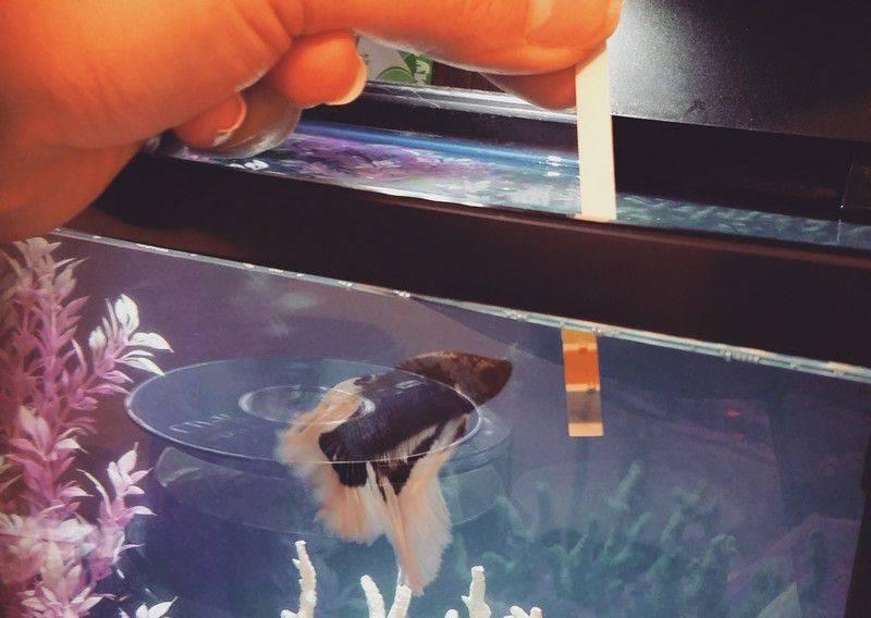 Почему умирают (дохнут) рыбки в аквариуме: что нужно делать, от чего гибнут, причины