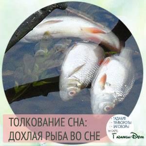 Сонник мертвые животные и рыбы. к чему снится мертвые животные и рыбы видеть во сне - сонник дома солнца