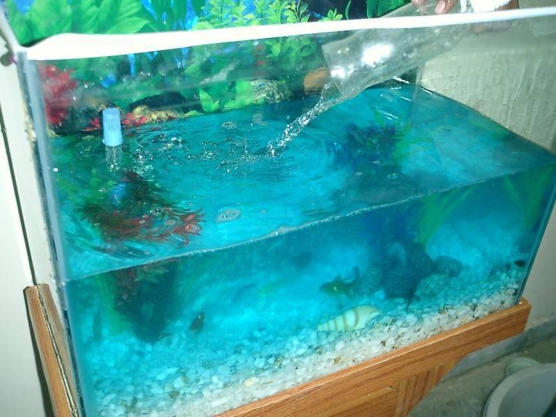 Как правильно и зачем нужно отстаивать воду для аквариума- ribulki.ru