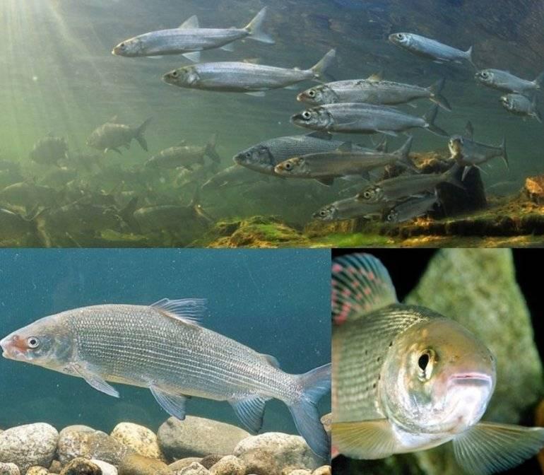 Полный список морской рыбы
