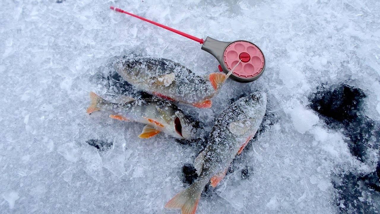 Ловля ерша зимой на мормышку | ловим все
