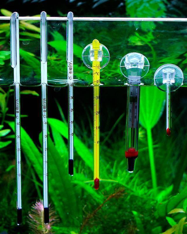 Актуальный вопрос: как охладить воду в аквариуме в жару? топ-8 способов