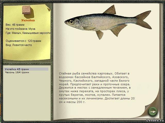 Как засолить и завялить рыбу чехонь, посол и хранение вяленой рыбы
