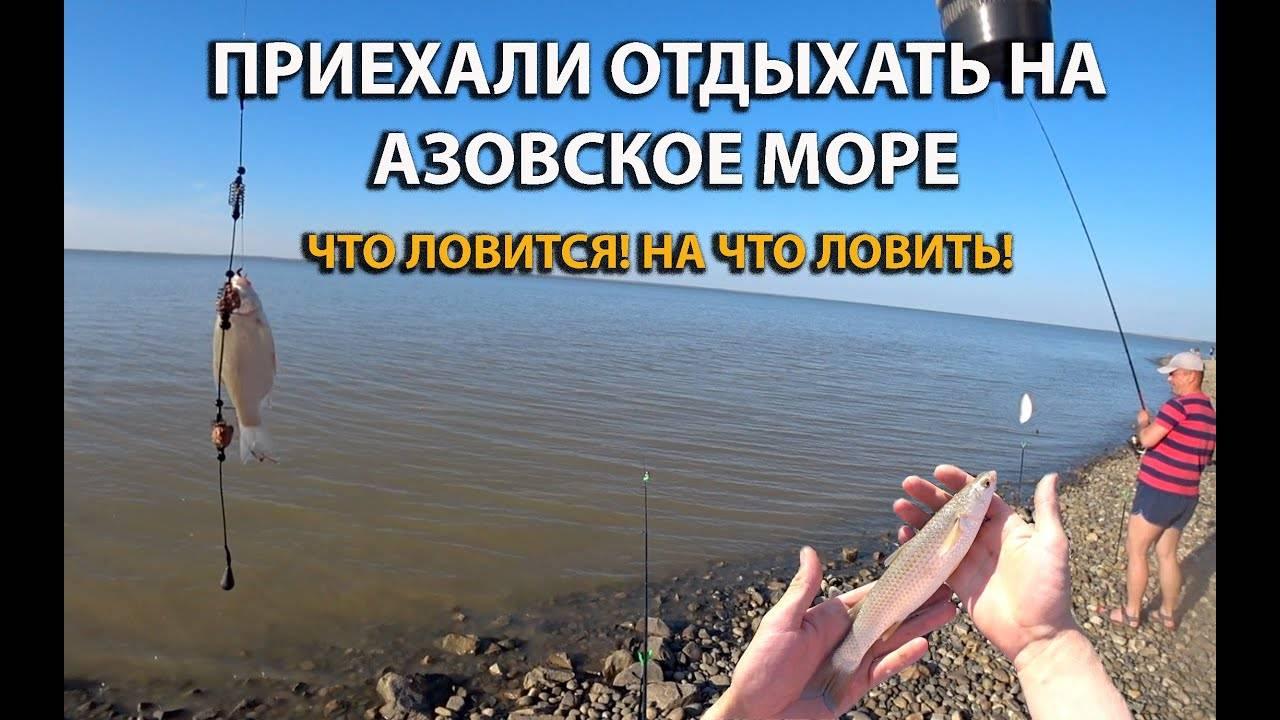 Кто водится в азовском море, особенности рыбалки