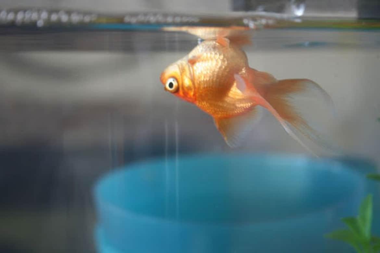 Народные приметы об аквариуме и рыбках